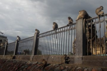 Lopburi Monkey City Thailand weird thing in thailand and bangkok