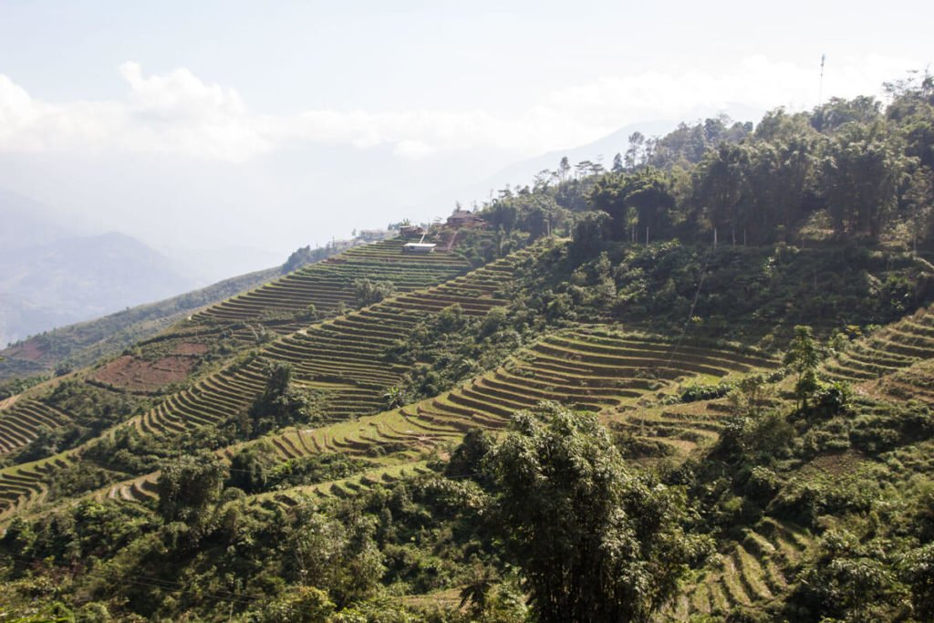 le risaie di Sapa - rice fields in Sapa